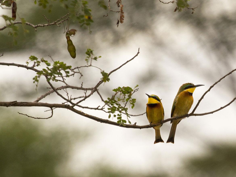 misc-oiseaux