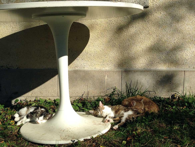 misc-sieste-feline