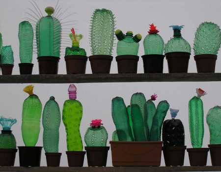© Cactus collection by Veronika Richterova