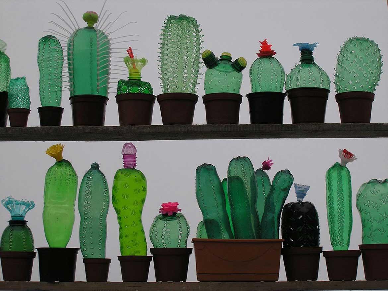 © Cactus collection by Veronika Richterova