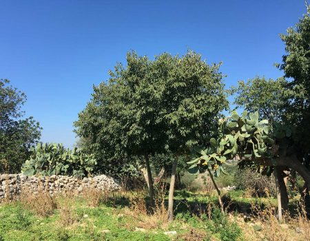 Misc Webzine - Road Trip Sicile