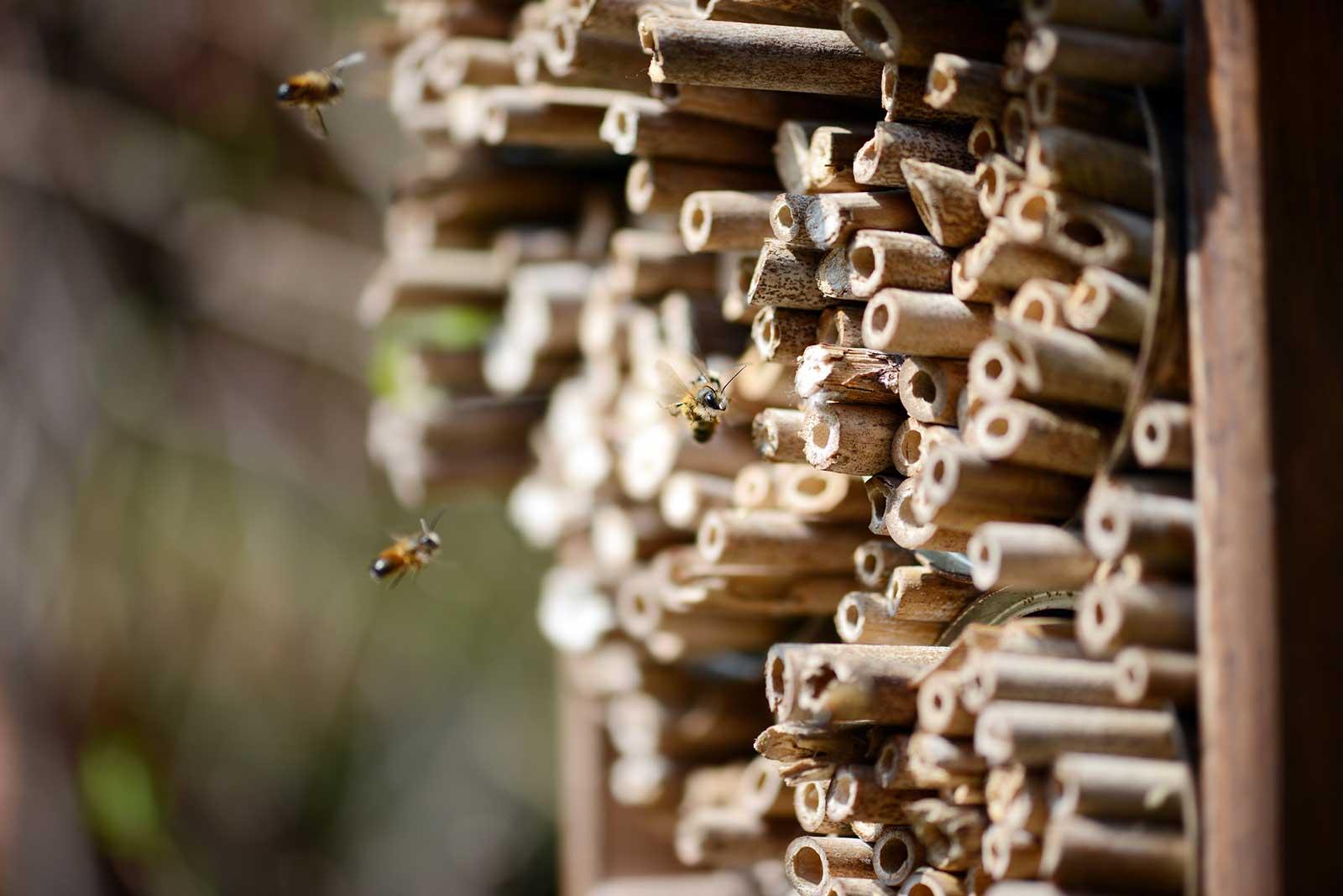 CAILLARD_Visuel-hôtel-à-insectes_abeilles_©-Caillard